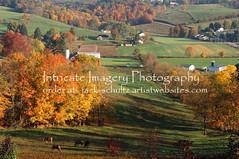 Fall in Amish Country 5799 (intricate_imagery-Jack F Schultz) Tags: jackschultzphotography intricateimageryphotography amishcountry fallcolor holmescounty southeasternohio horses