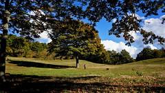 Come Maya (Franco Vannini) Tags: madonnadelfaggio tuscany toscana beech oak faggio quercia autunno goldenretrievers