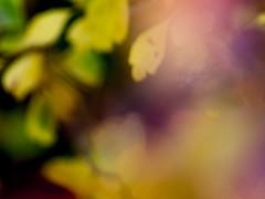 Autumn Almanac (Jam-Gloom) Tags: superozeckiiautomcf28135mm superozeckii superozeck ozeck super 135mm 135 28 f28 135mm28 macro omfit olympusuk olympusomdem5 olympusomd olympus omd em5 autumn autumnal shocottspring shocott eastcotts bedford bedfordshire britishcountryside countryside british nature textures textural bokeh bokehlicious bokehful leaves pinecones pineleaves berries berry ethereal otherwordly manualfocus
