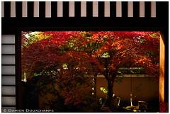 Afternoon sun in Tenkyu-in temple, Kyoto (Damien Douxchamps) Tags: japan  japon kansai  kinki  kyoto   ukyo ukyou west western  templecomplex myoushinji myoshinji temple      tenkyin subtemple  momiji autumncolours mapletree fallfoliage   japanesegarden  shoji