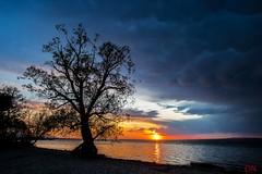 Lonely Tree (Oliver Noggler) Tags: bodensee bregenz vorarlberg österreich at baum sonnenuntergang wolkenstimmung abendrot wasser