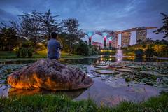 The Garden of Evening Lights (- Etude -) Tags: none singapore garden light pond bluehour zachchang