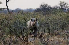 Etosha Black Rhino (C McCann) Tags: etosha national park namibia blackrhino rhino rhinoceros animal safari