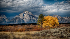 Autumn in the Tetons (walts photos) Tags: oxbowbend yellowstone