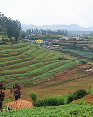 Terrace Farming (code_martial) Tags: d3300 1685mmf3556gvr ooty2016 ootacamund udhagamandalam