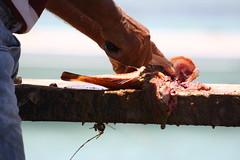 Fisherman in Isla Lobos (Laura Camnasio) Tags: holiday fish fisherman fuerteventura elcotillo