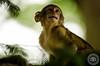 _NNP0227 (NickNeuenhaus) Tags: baby sunlight white black colour cute speed photoshop monkey amazing nikon funny raw natural bokeh young newborn laugh shutter jpeg playful trentham lightroom 300mmf4 d7000