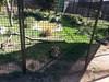 20150919_123441 (mjfmjfmjf) Tags: oregon zoo 2015 greatcatsworldpark