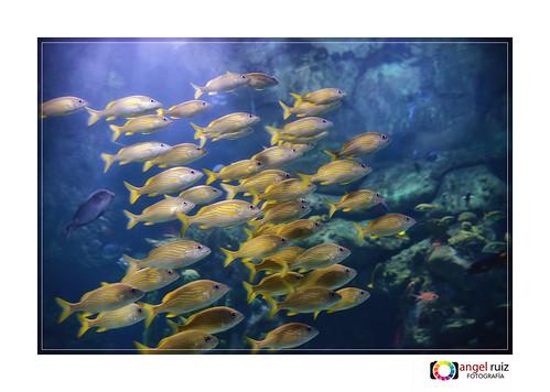 Oceanographic - Valencia