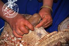 elaboración manuel y artesanal del aceite de argan (sahatours) Tags: voyage africa travel viaje nikon morocco maroc viagem marocco marruecos viaggio marrocos travelphotography travelphoto arganoil