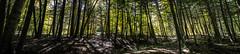 8 October 2015 (runningman1958) Tags: trees panorama nature forest woods nikon 365 365dayproject d3100 nikond3100 d3100nikon
