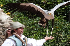 A man and his common pet (Slayce) Tags: show pet man bird birds animal animaux oiseau oiseaux spectacle puydufou