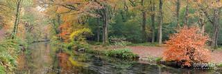 Autumn on the Teign.