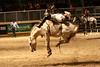 RAWF15 JSteadman 0108 (RoyalPhotographyTeam) Tags: sun royal rodeo 2015 rawf nov08