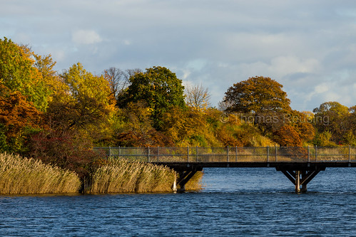 Autumn in Copenhagen - Bridge over Stadsgraven 1/2