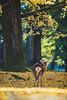 銀杏と鹿 (igu3) Tags: japan nara