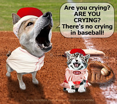 Crying? There's no crying in Baseball (Amusings of a Beautiful Mind) Tags: dog game sport horizontal chalk athletics kitten baseball dirt recreation base infield tomhanks mlb firstbase traditionalsport teamsport aleagueoftheirown genadavis sportsbackground