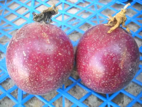 Passion Fruit large size fruits b Oct 18, 2015