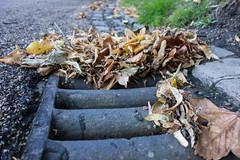 257/365 - Drift (Spannarama) Tags: road uk autumn london leaves grate floor blackheath ground september drain pile groundlevel gutter 365 drift ratseyeview catorestate