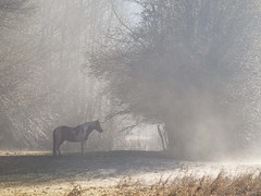 L'ombre d'un rve ****-+- (Titole) Tags: trees horse mist field thumbsup gamewinner cywinner 15challengeswinner friendlychallenges thechallengefactory storybookwinner titole perpetualchallenge nicolefaton