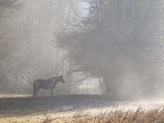 L'ombre d'un rêve ****-+°-°°° (Titole) Tags: horse mist field trees titole nicolefaton 15challengeswinner friendlychallenges thumbsup perpetualchallenge thechallengefactory storybookttwwinner gamex2 cy2 challengegamewinner