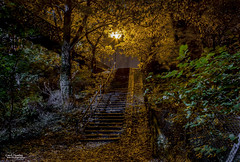 Falling leaves hide the path so quietly (Carl Yeates) Tags: autumn golden october canon leaves steps