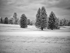PB020438 - Pine Family (Syed HJ) Tags: olympusomdem5 olympusem5 olympus em5 fujian35mmf16 fujian35mm fujian 35mm cctvlens nashua nh nashuanh blackandwhite blackwhite bw infrared bwinfrared ir 720nm
