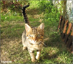 Le chat des voisins ... (Figareine- Michelle) Tags: chat bestofcats catmoments vg~catsgallery kittyschoice coth