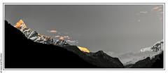 Sunrise on the Annapurnas (L'Abominable Homme de Rires) Tags: annapurna machhapuchhre nepal montagne montain trek atalante sunrise blackwhite nb noiretblanc annapurnaiii