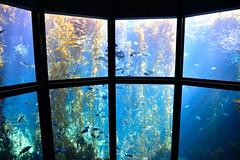 Aquarium Bay (RichSeattle) Tags: richseattle nikon d750 fish aquarium montereybayaquarium montereybay california