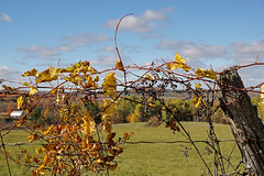 old farmers fence line (Wil James) Tags: elements sonya77mk2 fall ontario fenceline trees tamron