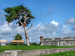 Castillo de San Marcos (Chris C. Crowley- grieving and recovering) Tags: castillodesanmarcos fort staugustineflorida turret walls coquina benches parkbenches cedartree trees grass lawn sky clouds bluesky nationalpark nationalmonument historic