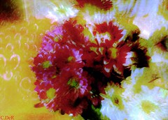 Flowers and bubbles (C.DeR) Tags: art texture flowers nature multipleexposures adobe pastel bubbles abstract style flower