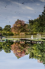 2016-10-16_10072016-10-16_1007_DSC5028 (Doug.Mall) Tags: usa boston massachusetts bostoncommon fallcolor reflection trees frogpond