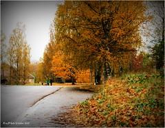 My way home... (Eva's PhotoAlbum) Tags: skinnskatteberg bergslagenvestmanland sweden daarklands