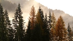 Dolomites 8 (Rind Photo) Tags: dolomites italy alps mountain trees light forest autumn