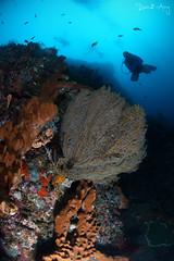Wall (Randi Ang) Tags: tulamben bali indonesia underwater scuba diving dive photography wide angle randi ang canon eos 6d fisheye 15mm randiang