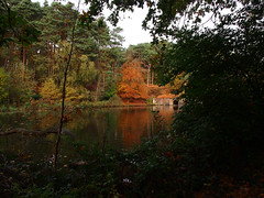 autumn lake (mark.griffin52) Tags: olympusem5 england bedfordshire stockgrovecountrypark landscape reflections colour trees autumn woodland water lake