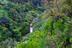 Puohokamoa Waterfall (milepost430media.com) Tags: green trees jungle tropical hawaii maui hana water wet flow stream river waterfall flooded rainforest beautiful natural nature 70d dslr