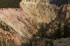 untitled-6 (eenerf) Tags: wyoming yellowstonecanyon yellowstonepark naturalbeauty nature