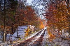 Efterårsskov