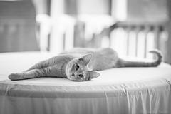 Kitty Curve (Jonathan Tasler) Tags: cat kitty tail blackandwhite