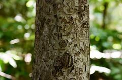 tree carvings (september.) Tags: 35mm film canonae1 kodakportra400 washingtondc canonfd85mmf18 rooseveltisland tree carving theodorerooseveltisland