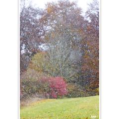 Schneefall (horstmall) Tags: schnee snow neige winter hiver cold klte froid bunt colorful couleurs couleursdautomne fallcolors herbstfarben sprinkle gesprenkelt freckled snowflakes dots schneeflocken schneegestber blizzard schwbischealb jurasouabe swabianalps donnstetten rmerstein neidlingerweg hecke gebsch hedge wald forest wood woodland wldchen fort rot red rouge horstmall