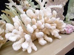 Coral (dog.happy.art) Tags: coral souvenir shop store padreisland texas