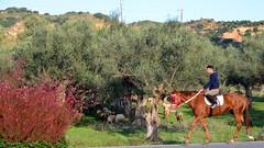 Mounted Shepherd (RobW_) Tags: mounted shepherd sheep olive grove sparti zakynthoskyparissi greece friday 11nov2016 november 2016