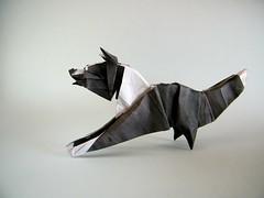 Border Collie - Quentin Trollip (Rui.Roda) Tags: origami papiroflexia papierfalten chien cachorro perro co dog border collie quentin trollip