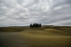 Waves and Cypress (Antonio Cinotti ) Tags: landscape paesaggio nuvole clouds toscana tuscany italy italia siena hills colline campagnatoscana nikond7100 nikon d7100 cipressi cypress sanquiricodorcia valdorcia countryside