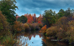 autumn mood (Monshtadoid) Tags: russia autumn forest landscape nature tree water river colourfull red green orange fall clouds cloudscape