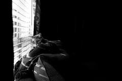 Her Place (Elizabeth_211) Tags: blackandwhite bw cats pets monochrome animals feline tennessee jacksontn westtn sherielizabeth